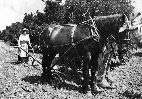 Lady plowing